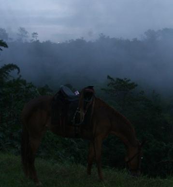 Paisaje nublado con caballo 2